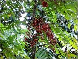 Health Coffee HPAI Pasak Bumi