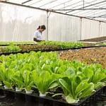 Solusi Perbaiki Ekosistem Pertanian Dengan Biotogrow