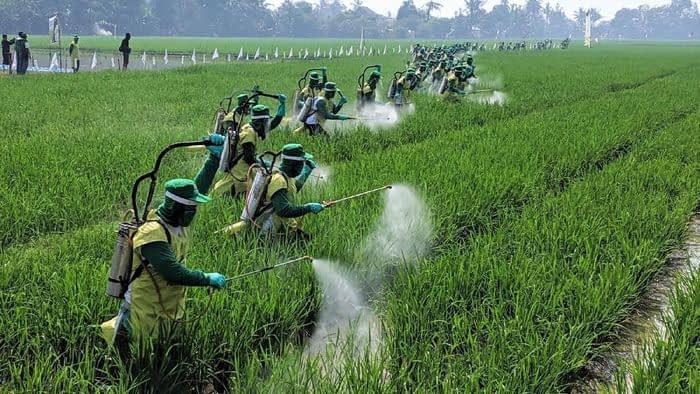 POC Pupuk Organik Cair Solusi Pertanian Masa Depan