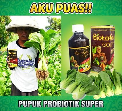 Jual Biotogrow Pupuk Organik murah Surabaya Sidoarjo raji-sawi-lebat-hijau-seger