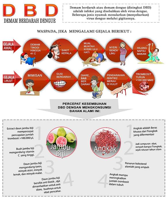info grafik foodigan demam berdarah dengue dan terapi dengan Tamr Bin Djened Plus Angkak
